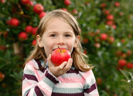 Köstlicher Apfelgenuss
