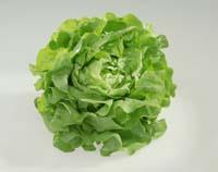 Salat bietet Nährstoffe, die beim Abnehmen helfen