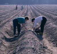 Was Sie schon immer über den Spargelanbau wissen wollten